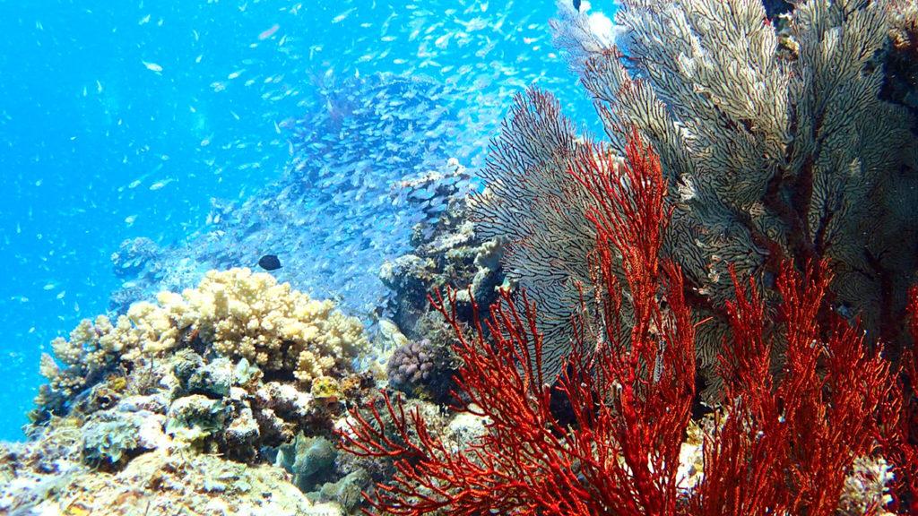 色とりどりのサンゴ