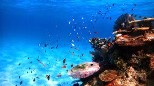 透明度の高い沖縄の海で遊ぼう